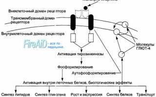 Влияние инсулина на обмен веществ