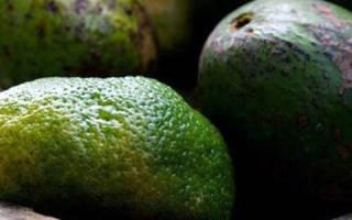 Авокадо и Болезни