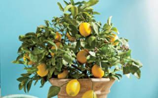 Лимон и Болезни