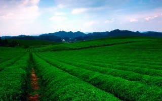 Зеленый чай и Болезни ответ врача