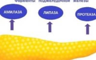 Протеолитические ферменты поджелудочной железы