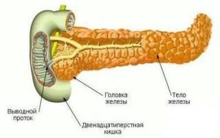 Поджелудочная железа вырабатывает гормоны и ферменты