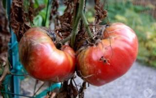 Овощи понижающие Болезни