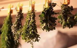 Какие травы полезны для поджелудочной железы
