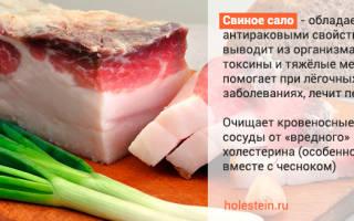 Повышает ли сало холестерин в крови