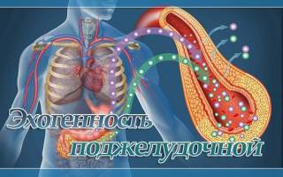 Эхогенность поджелудочной железы повышена что это такое