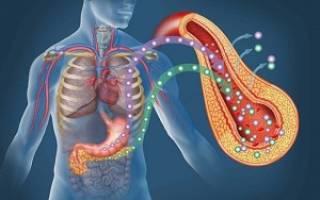 Гормон поджелудочной железы инсулин влияет на обмен