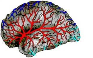Чем лечить Болезни сосудов головного мозга