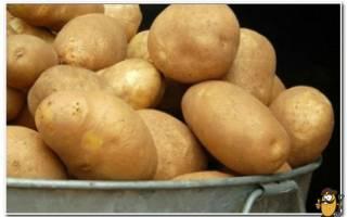 Можно ли есть картошку при Болезние