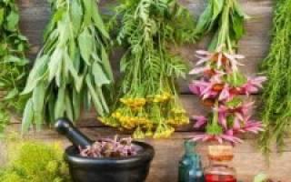 Травы против холестерина в крови