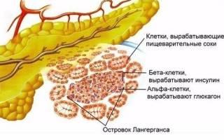 Какие ферменты выделяет поджелудочная железа
